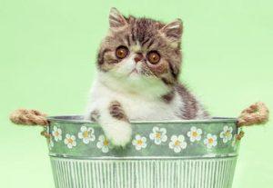Большая международная выставка и соревнования кошек и котят всех пород! в Израиле