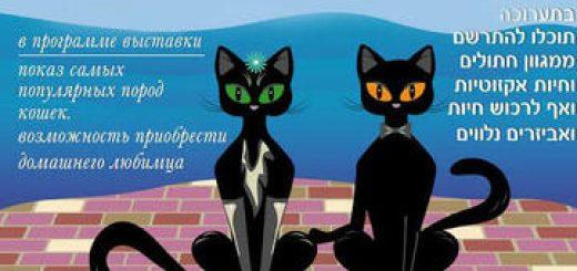 Международная выставка кошек в Бат Яме! в Израиле
