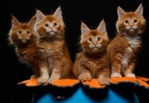 Большая международная выставка кошек в Израиле