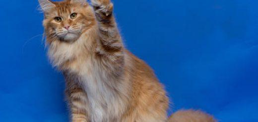Священных Египетских кошек фараонов привезут в субботу в Беер Шеву на один день