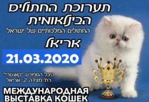 Большая международная выставка кошек и котят — Праздник для любителей кошек Мур-Мяу тусовка  в Ариэле. Развлекательная   шоу программа иллюзиониста в Израиле