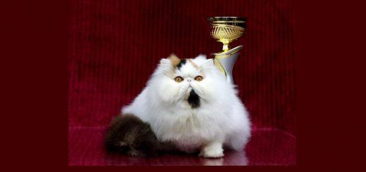 Большая международная выставка кошек и котят в Петах-Тикве и Холодно-галактическое театрально-научное шоу
