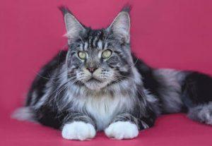 Выставка кошек и котят всех пород в Хайфе в Израиле